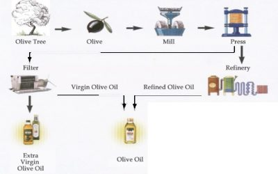 10/08/2019 – IELTS Writing Task 1 – Process Of Making Olive Oil